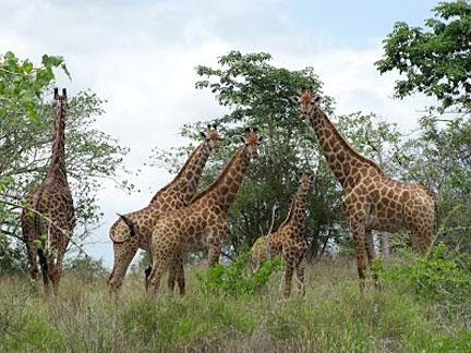 Novos parques nacionais para o Kuando - Kubango